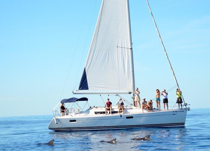 Excursion Observation de baleines et dauphins en voilier