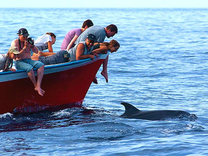 Excursion Observation des baleines à la gomera